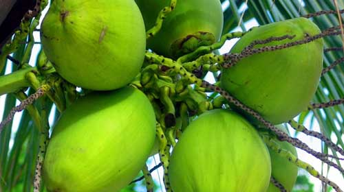 Green Coconut Water is Remedial for complex disease
